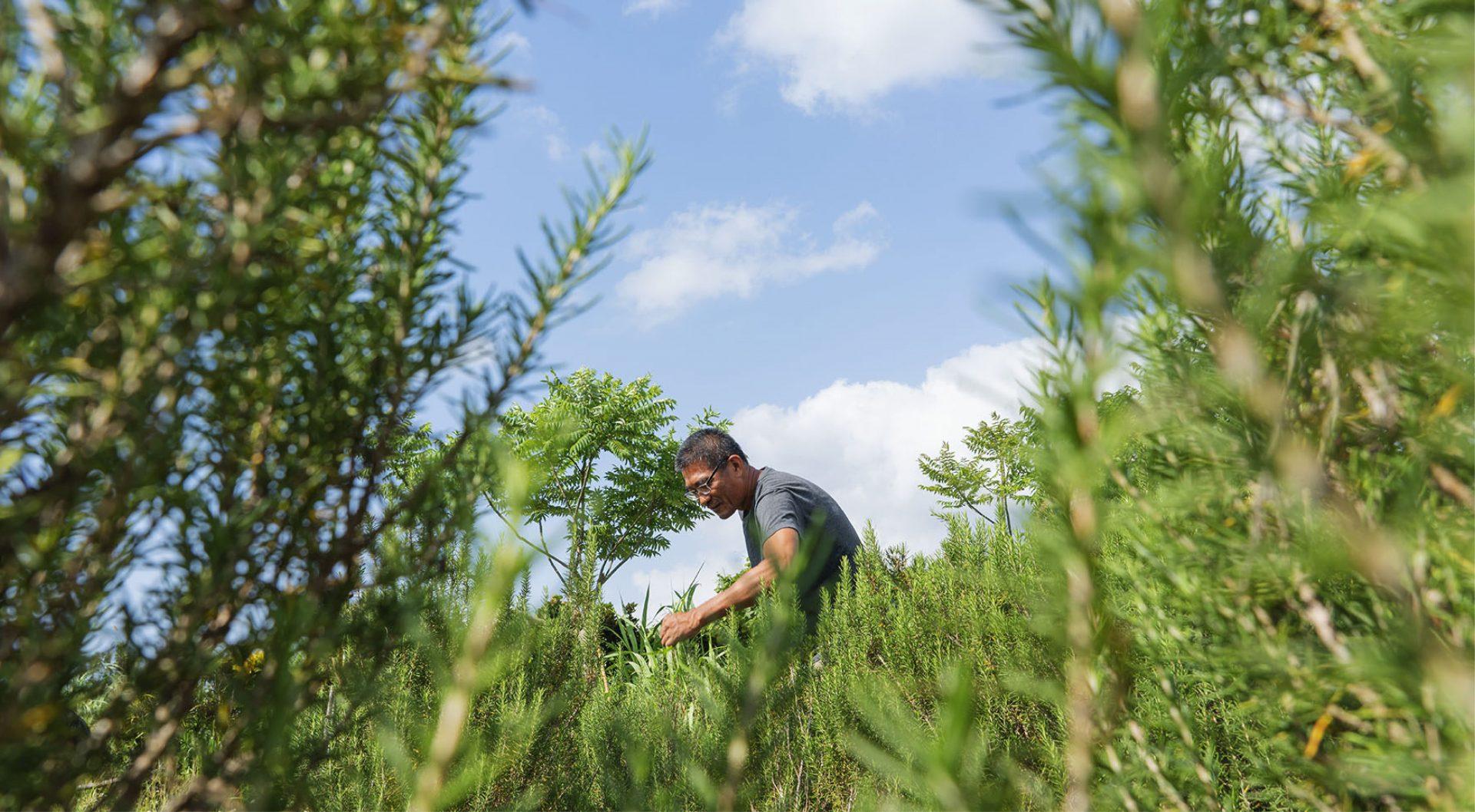 種一片香草園 栽培安居樂業的夢:李登庸與慕樂諾斯自然農場