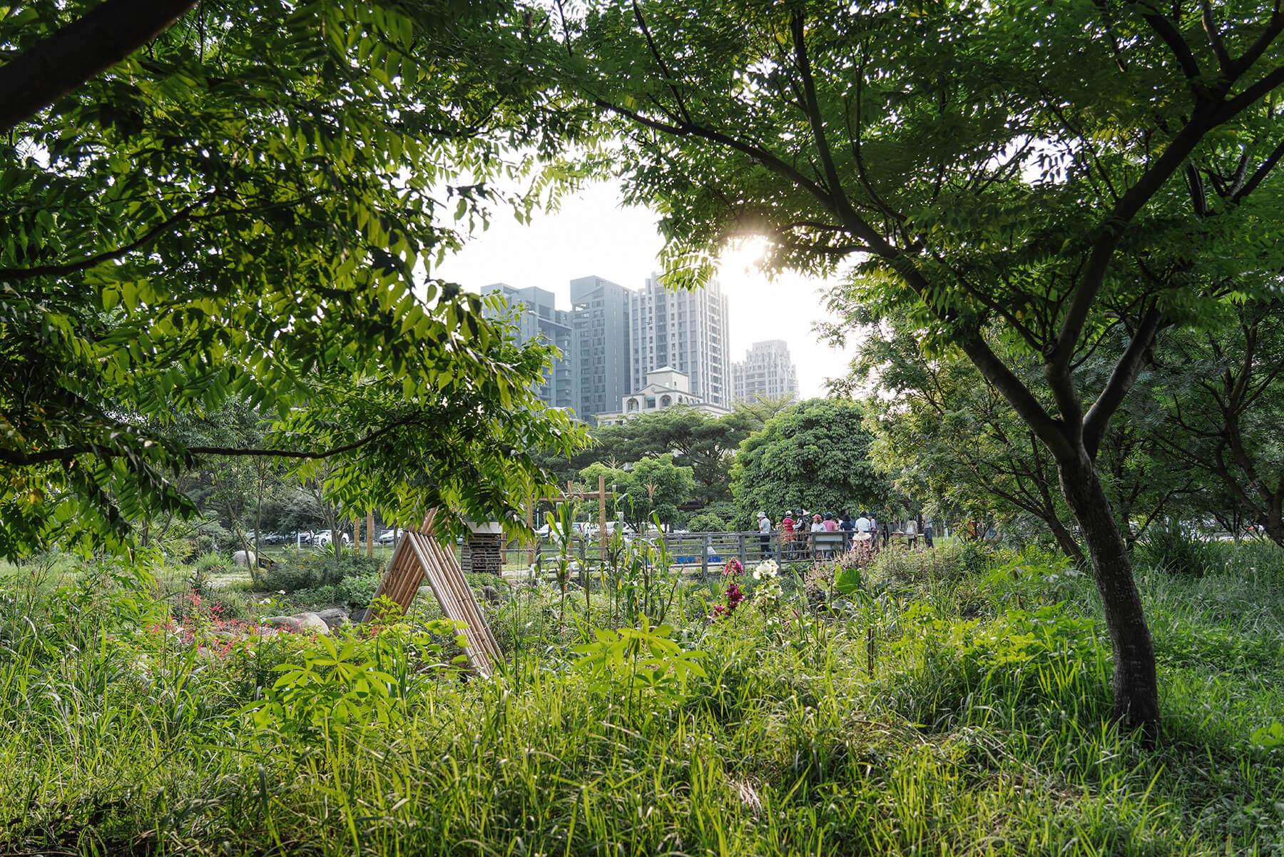 在水泥叢林中 共同擁抱一處可食綠意:梧桐基金會x食物森林