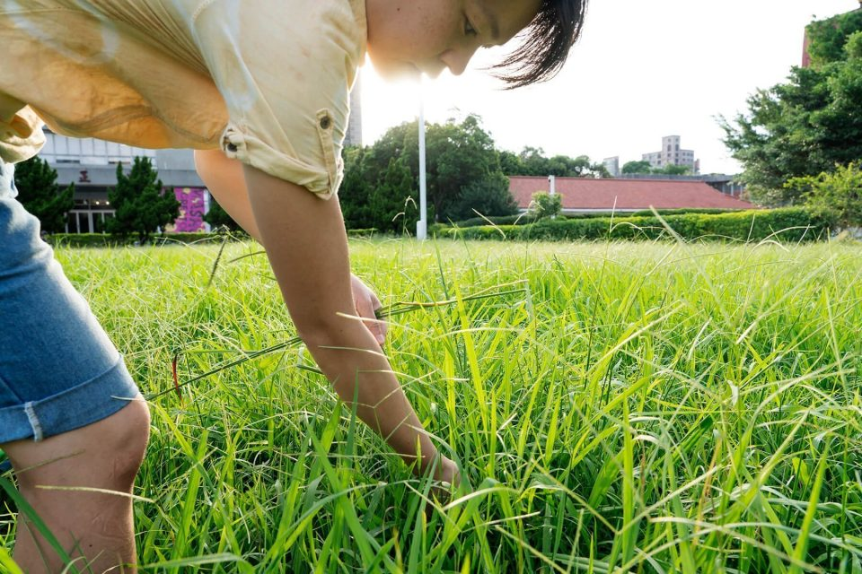沏一壺 土地的滋味:雜草稍慢