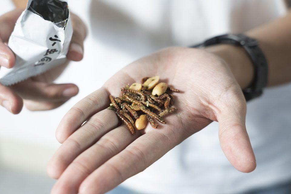 熟悉又陌生的滋味 昆蟲零食躍上未來餐桌 :食態 小虫同學